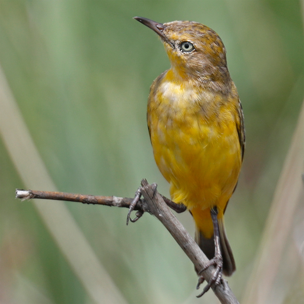 Yellow Chat