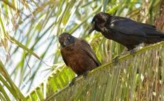 Little Crow (Image ID 41835)