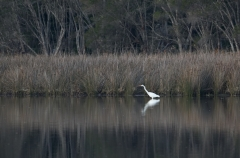 Lake Curalo, Eden  (Image ID 27671)