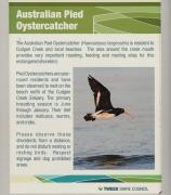 Australian Pied Oystercatcher (Image ID 33939)
