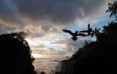 Lord Howe Island  (Image ID 35130)