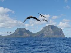 Lord Howe Island  (Image ID 36039)