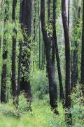 Bunyip State Park (Image ID 39445)