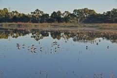 Bibra Lake, Perth (Image ID 41157)
